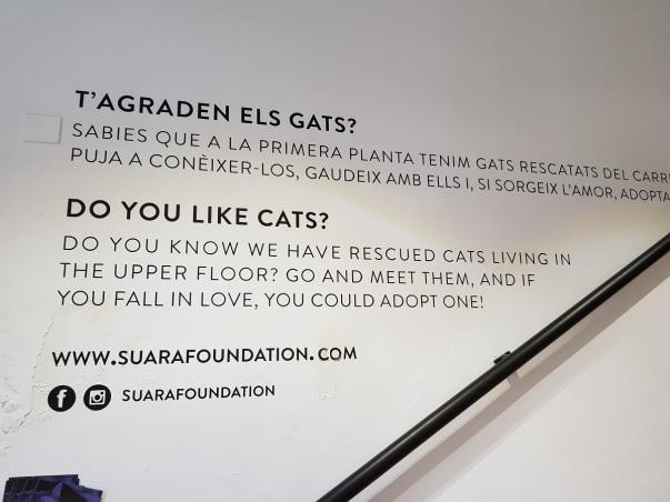 Suara Born cats barrio ayearinbarcelona